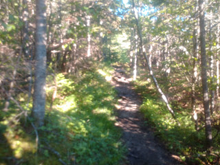 from trail